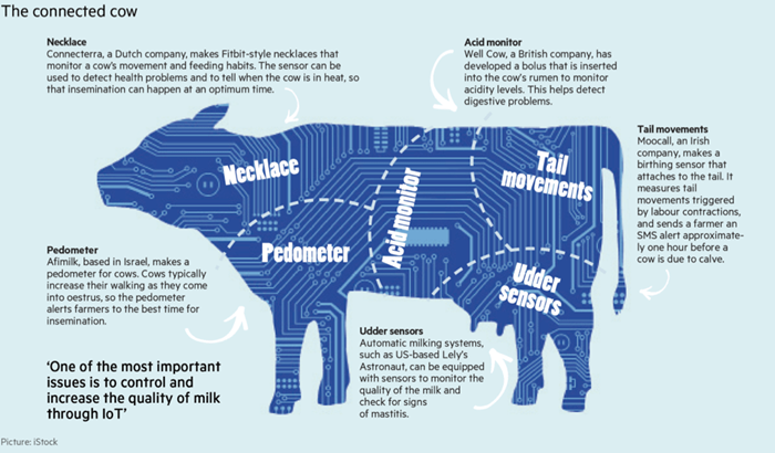 Connected cow chart